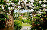 white flowers arched pathway mural