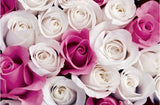 white roses wallpaper mural