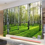Birch trees woods wallpaper