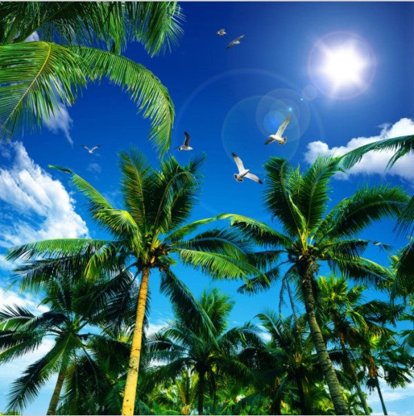 Custom 3d Tropical Coconut Trees Ceiling Wallpaper Home Or