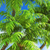 coconut trees wallpaper