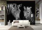 zebra animal print wallpaper