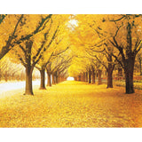 yellow leaves natural scenery forest mural