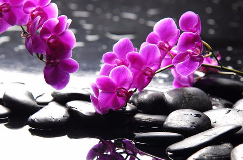 orchid zen stone wallpaper