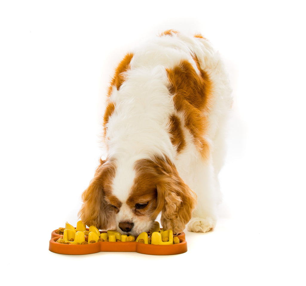 Guzzle Muzzle Slow Feeder Dog Bowl