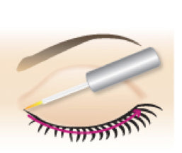 Apply RapidLash to upper eyelid
