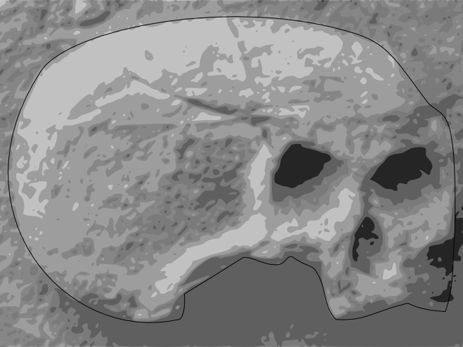 Skull image processed to sharpen and with crisp outline.