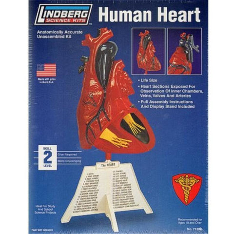 Human Heart - Hearns Hobbies Melbourne - LINDBERG
