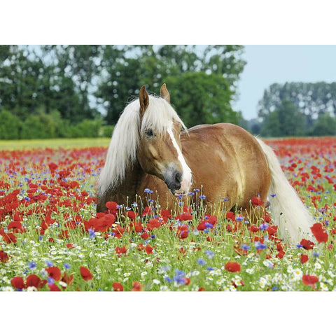 Ravensburger - Horse in the Poppy Field Puzzle 500pc (RB148