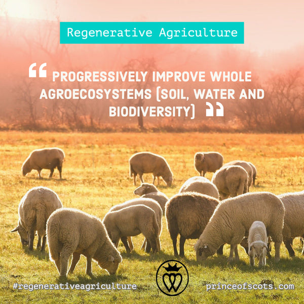 Regenerative Agriculture for Your Home, Buy Less and Buy Better