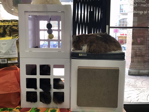 As You Can See, Our In Store Cats, George U0026 Theo, Absolutely Love Their New  Katt3 Condo.
