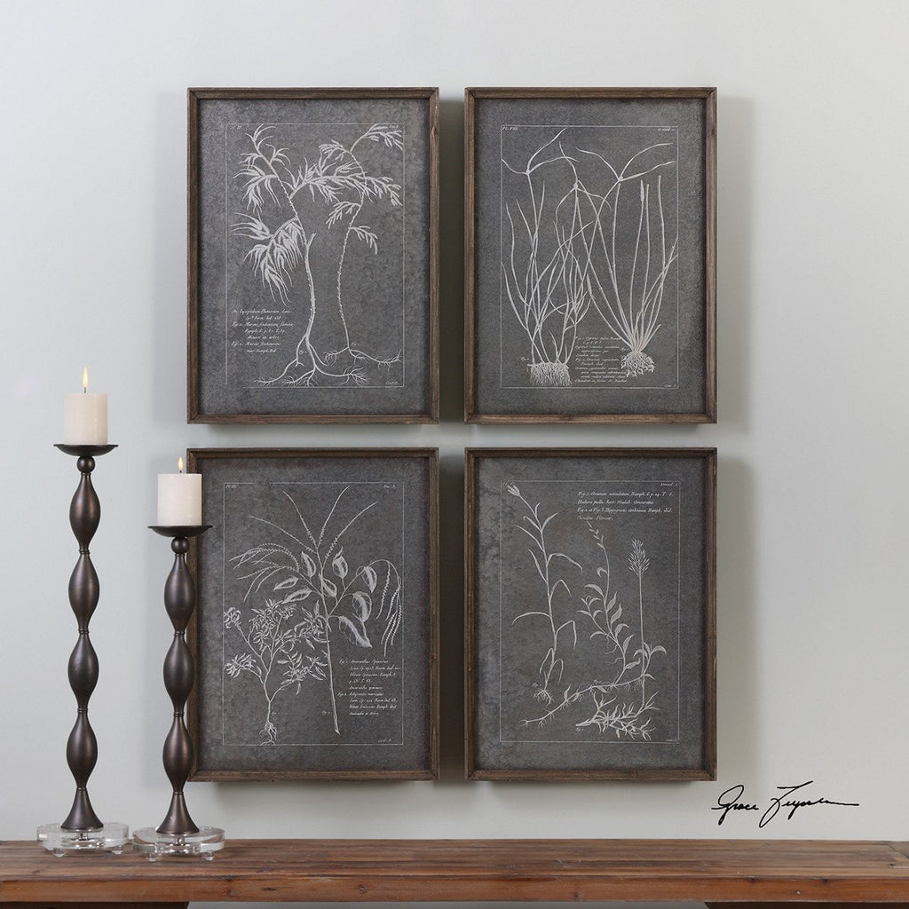 Uttermost Root Study Artwork Set of 4