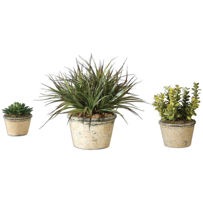 Uttermost Set of 3 La Costa Greenery Box Planter