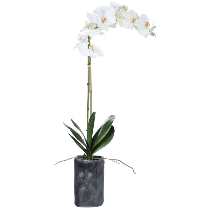 Uttermost Eponine White Orchid
