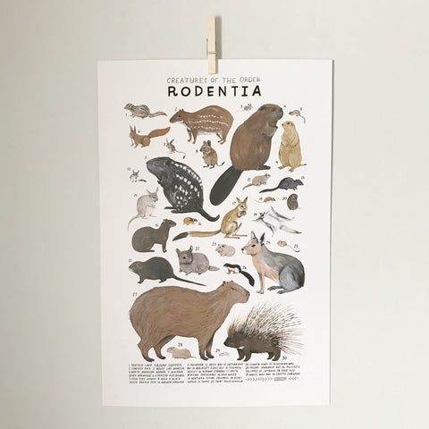 Plakat, Creatures of the order Rodentia - WIIKWAM