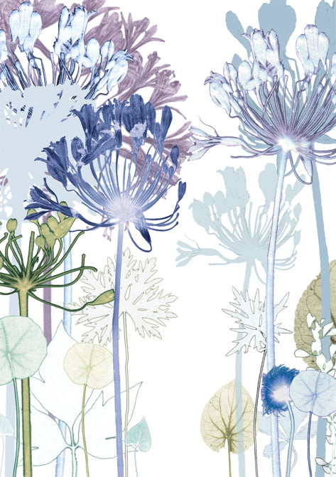 Agapanthus Path Card