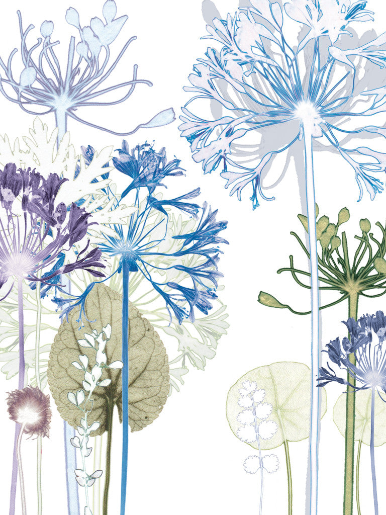 Agapanthus Forest Reproduction Print
