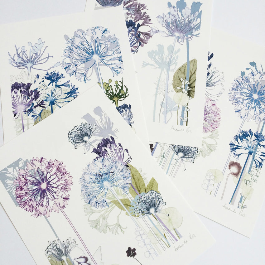 instagram blue gray gal giveaway agapanthus
