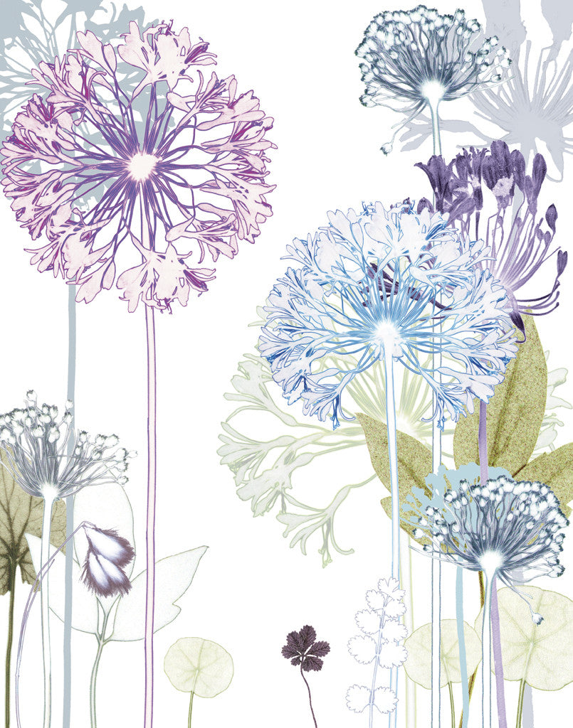 Agapanthus Trail Reproduction Print