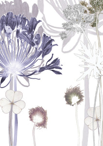 Agapanthus Walk Card