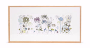 'Allium Ramble' Limited Edition Print