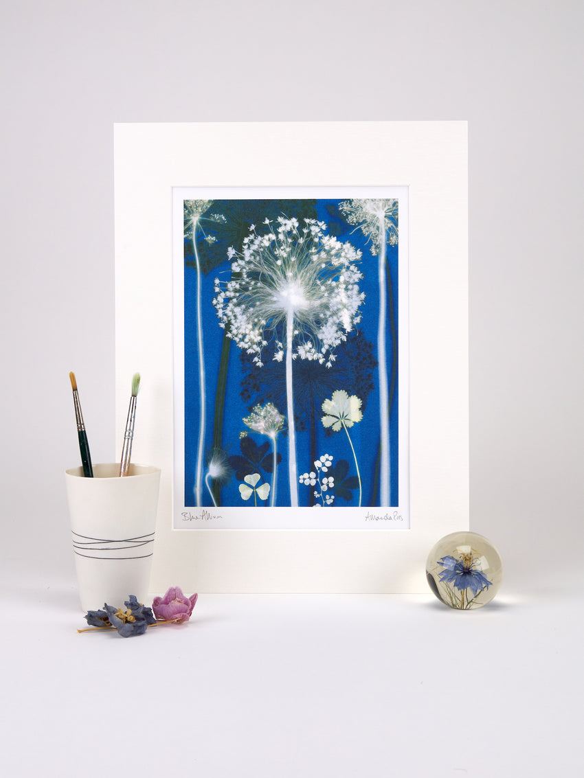 Blue Allium Print