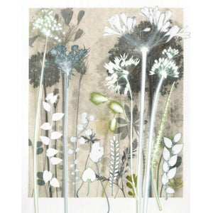 Luminous Cotton Sedge Original Print