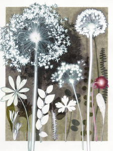 Moonlit Umbels