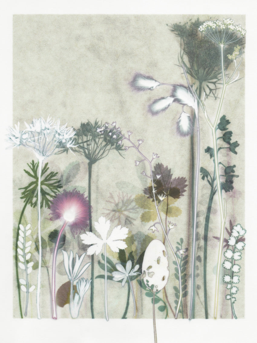 'Ramsons and Pignut' Print