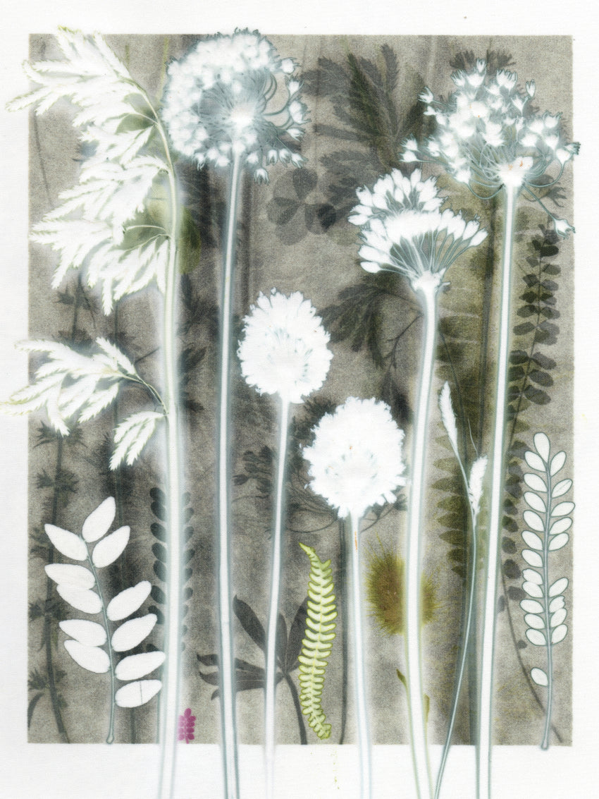 Smoky Allium Study