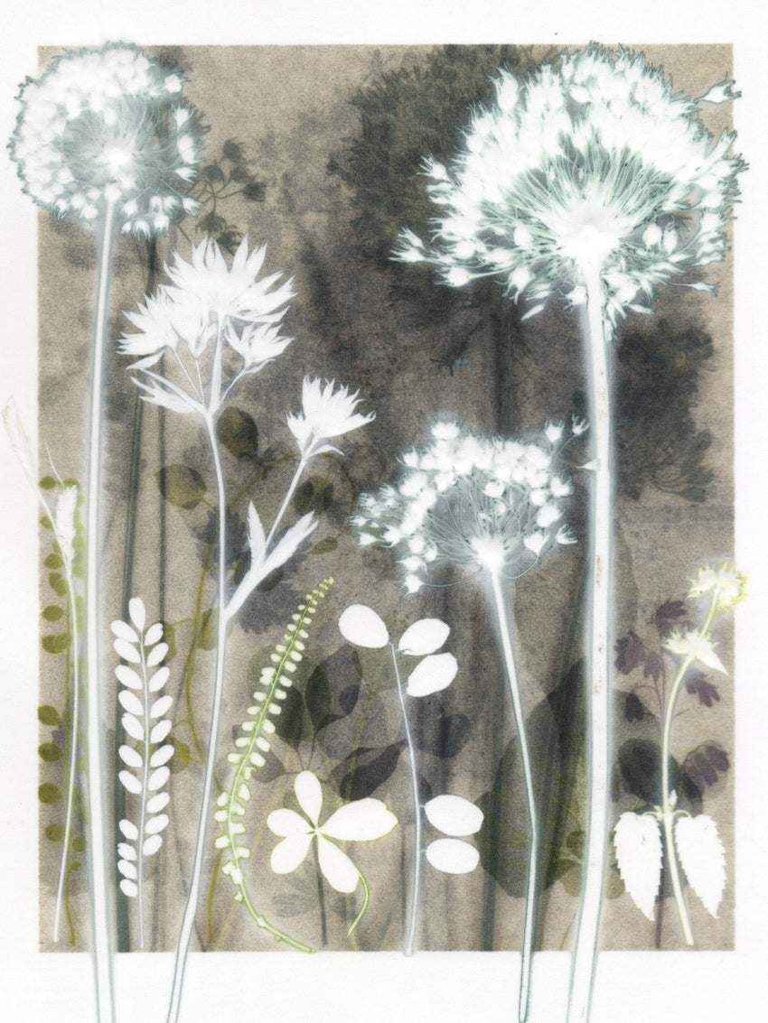 Soft Garden Shadows Study
