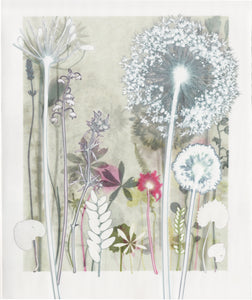 White Allium Print