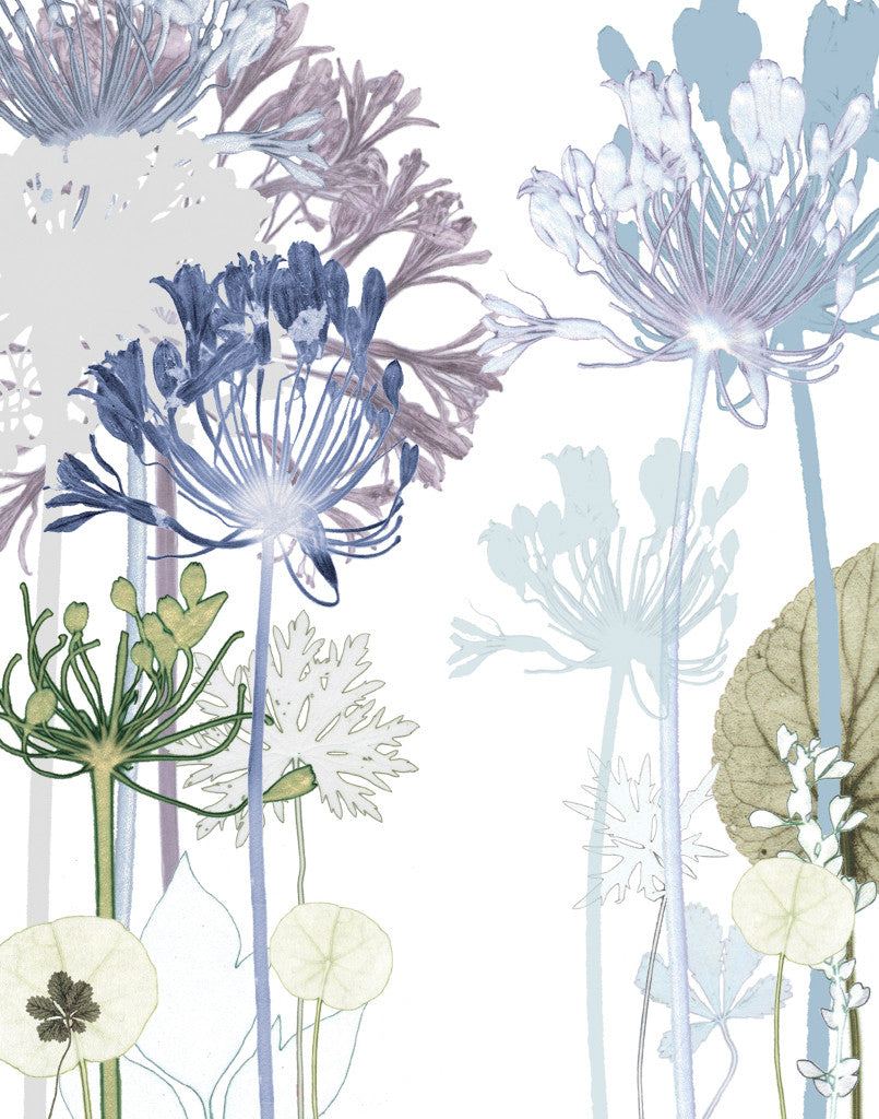 Agapanthus Path Reproduction Print