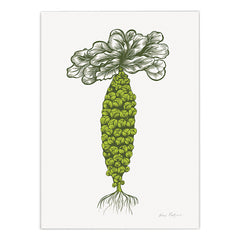 Brussels Sprouts Print
