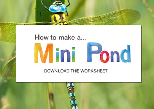 How to make a mini pond
