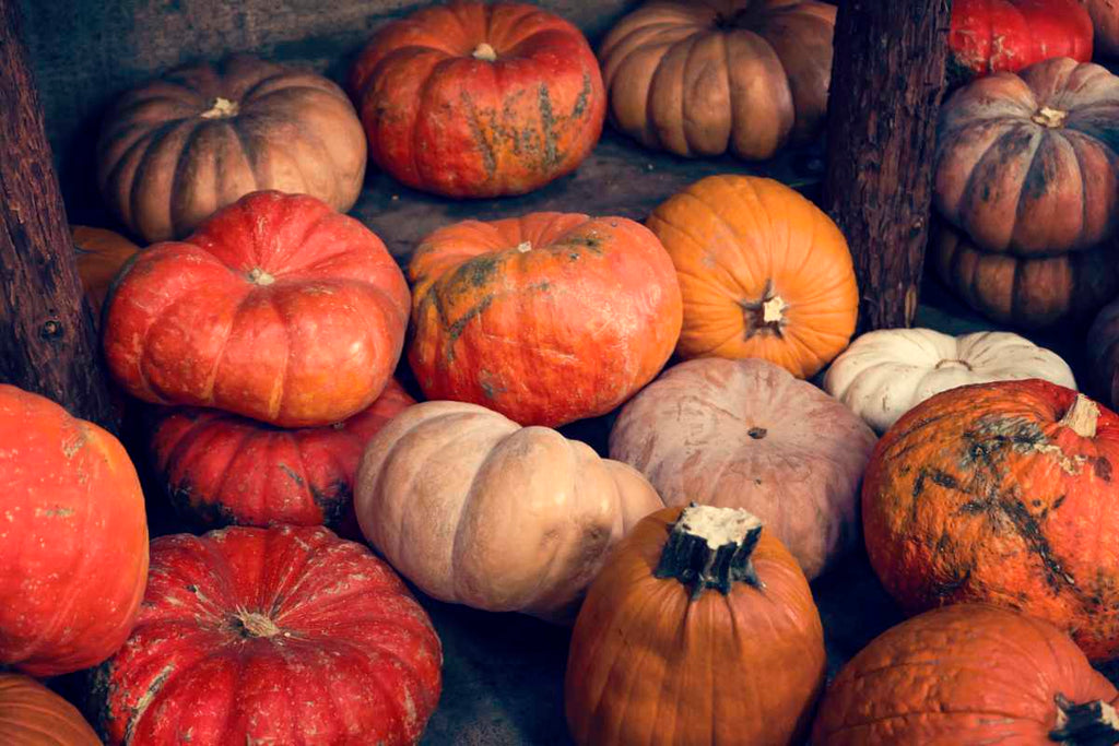 Pumpkin & Squash Recipes
