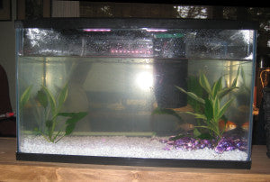 Gilly new home