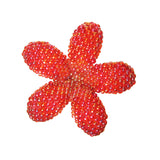 Heart in Hawaii Small Beaded Plumeria Flower Brooch - Opalescent Red