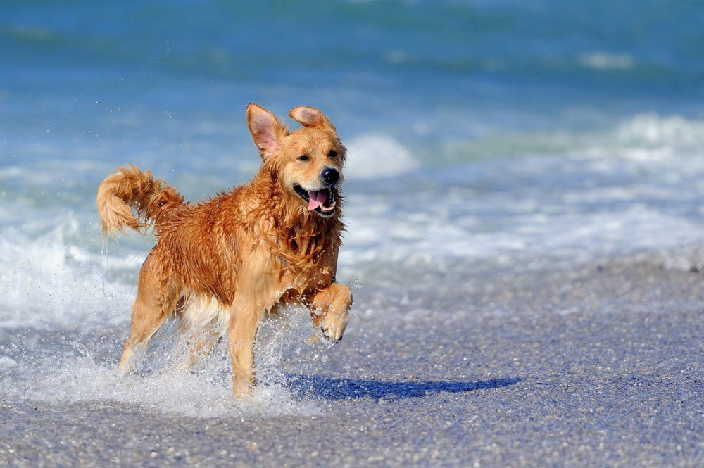 tips to keep dogs safe and cool