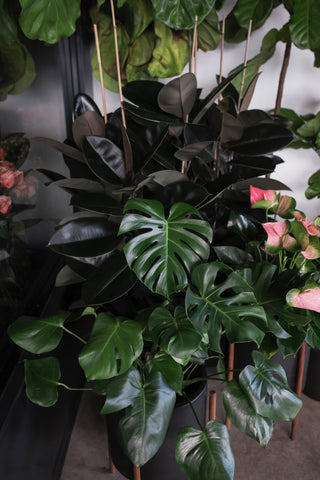 Plants in Camelback Flowershop