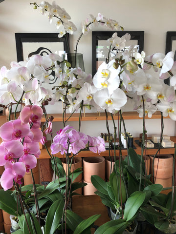 Orchids at Camelback flowershop