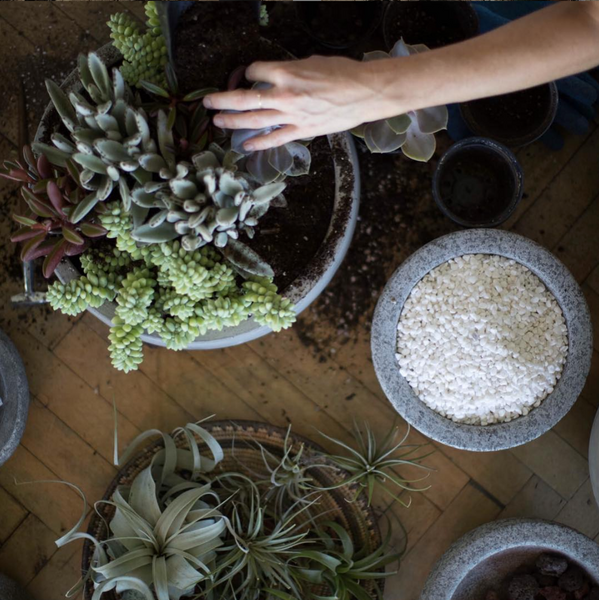 guide to repotting succulents