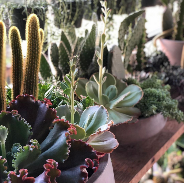 succulent plant care and repotting guide