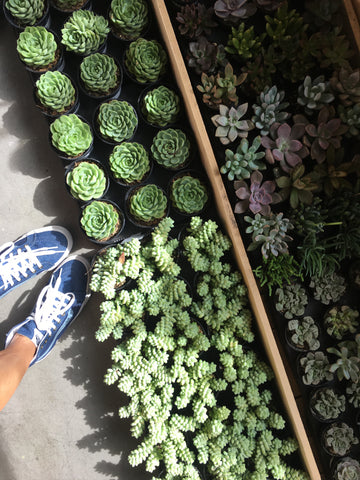 Shoes and Succulents