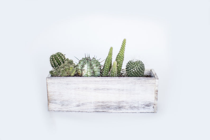 Wooden Box with Succulents/Cacti