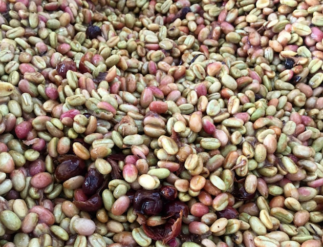 Experimental Coffee Processing Methods, Explained – PT's Coffee