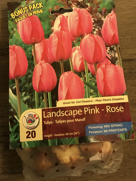 Tulip Bulbs- Lanscape Pink
