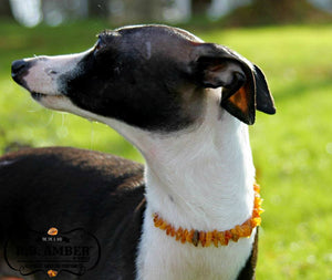 Baltic Amber Pet Collar - R.B. Amber & Sons