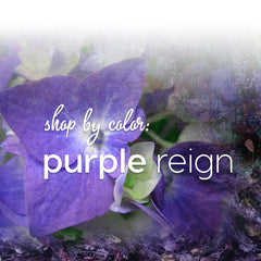 Shop by Color: Purple Reign