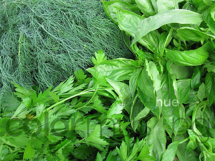 Fresh Herbs, downloadable PSD/JPEG files, original photo (1 image, 2 formats, print/screen use)
